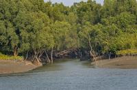 A Description Of Sundarban In Bangladesh