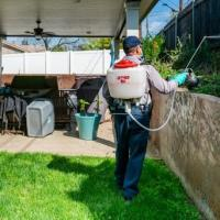 Things To Expect From The Top Pest Control Calabasas Company