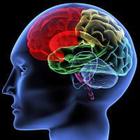 Advo Focus Brain