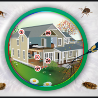 All You Need To Know About Pest Control Services
